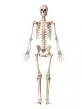 解剖学的肢位