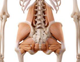 骨盤の筋肉